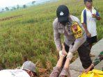 Mayat Perempuan Tanpa Identitas Berjilbab Ditemukan Tergeletak di Pinggir Sawah di Adiraja Adipala