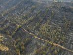 Kebakaran Hutan 'Bak Neraka' di Turki, 4 Orang Tewas dan Ribuan Orang Dievakuasi